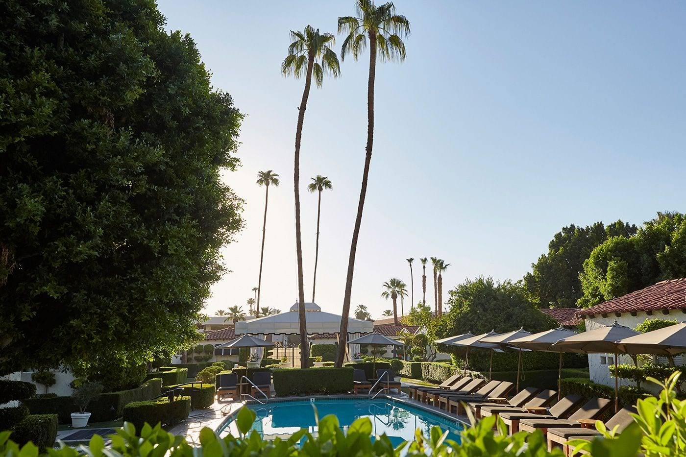 outdoor pool with palm trees at Avalon Hotel