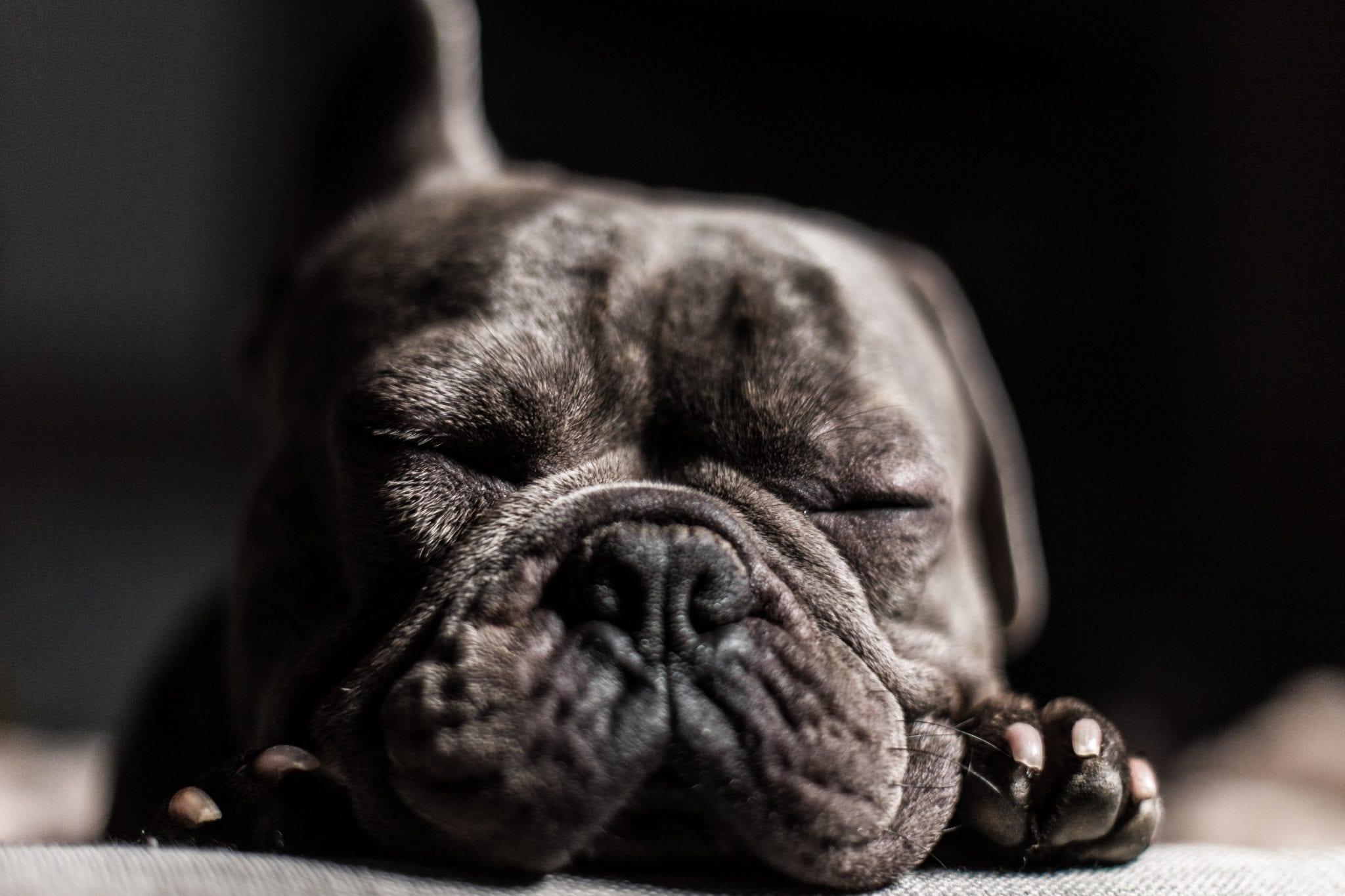 puppy sleeping, eyes closed